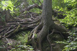 Renforcer ses racines